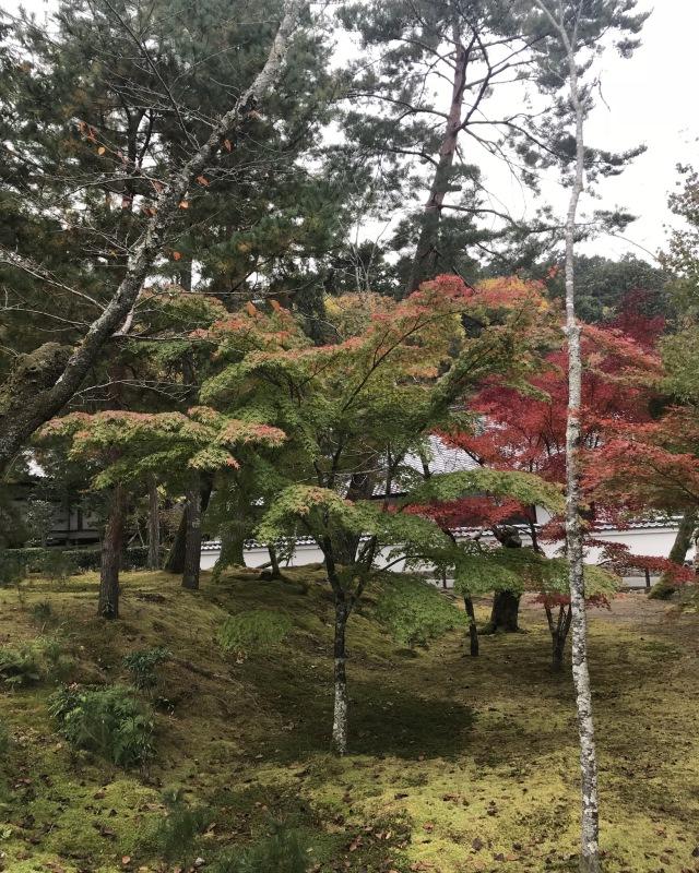 ゆき散歩。京都の紅葉と言えば南禅寺。15年ぶりに行ってきました!_1_4-2