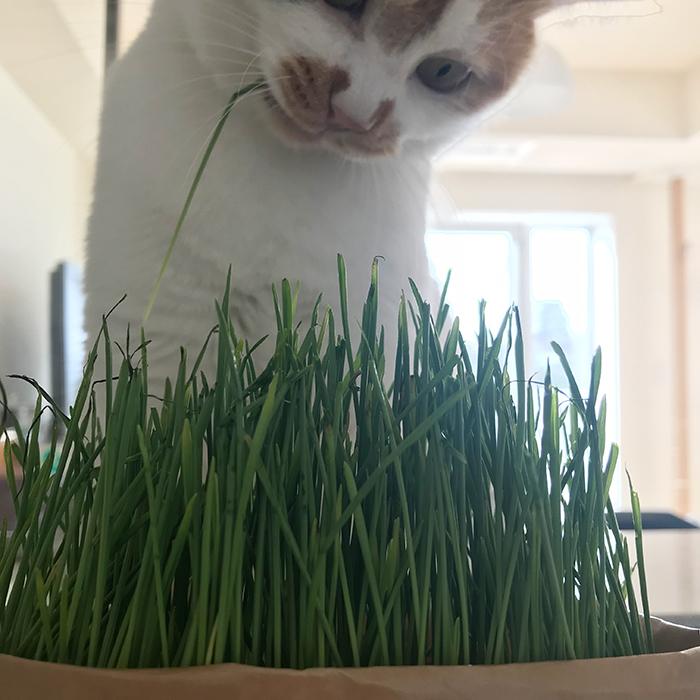 まりもちゃん、草食女子