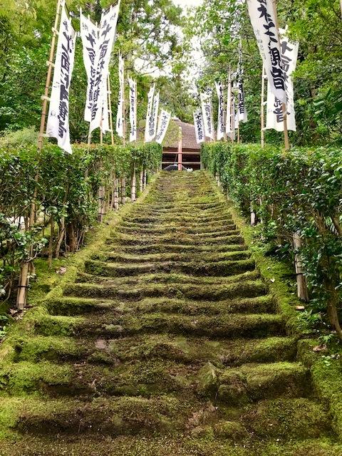 杉本寺 苔の階段