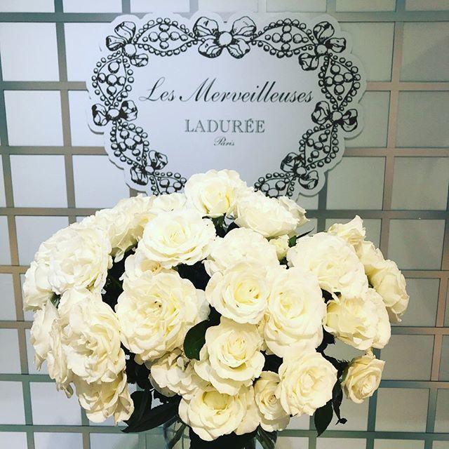 純白のバラの花びらで透明感ある肌づくり_1_2