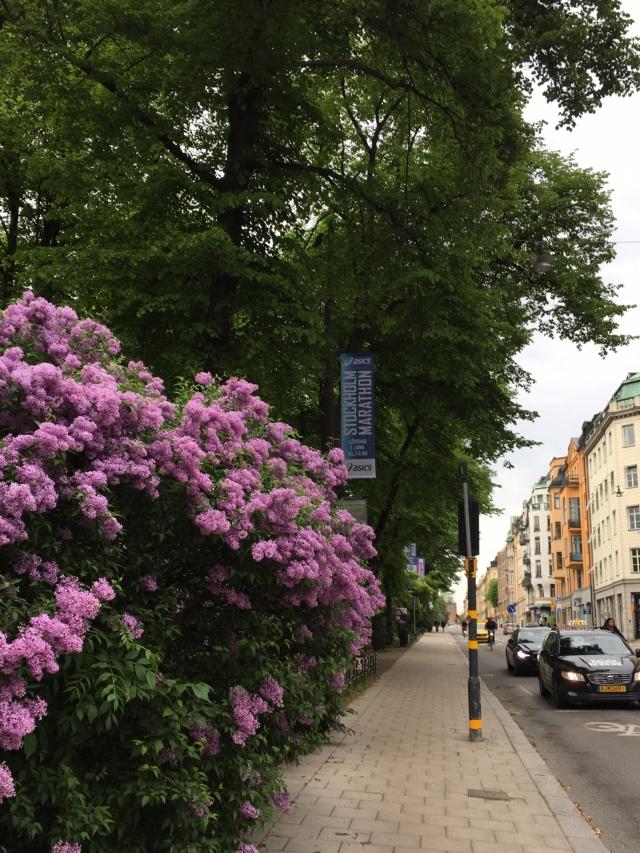 Stockholm(ストックホルム)_1_12