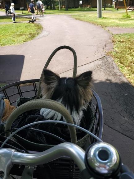 自転車かごにのる犬