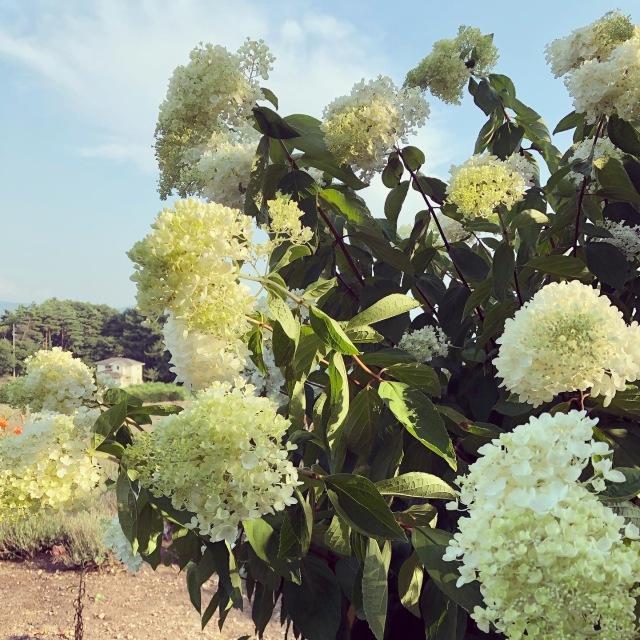 【yuccoのハーブ便り】植物の生命力に触れること。_1_2