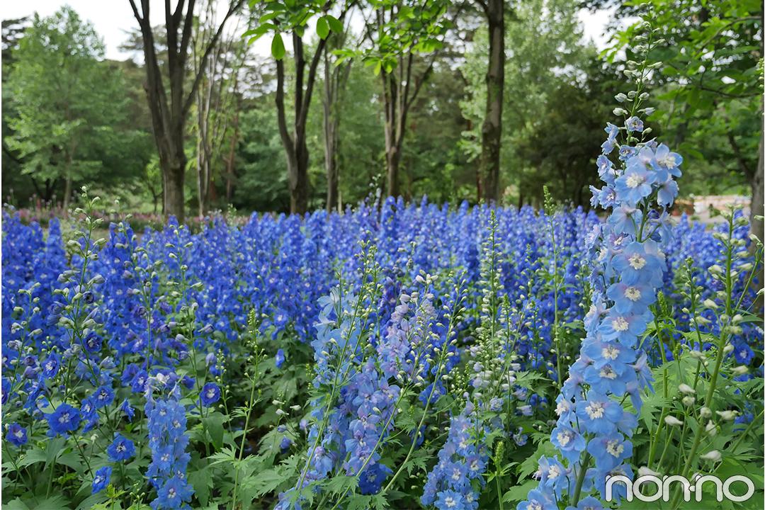 まるで海外みたい! 目で楽しむ♡ 国営武蔵丘陵森林公園の花畑_1_2