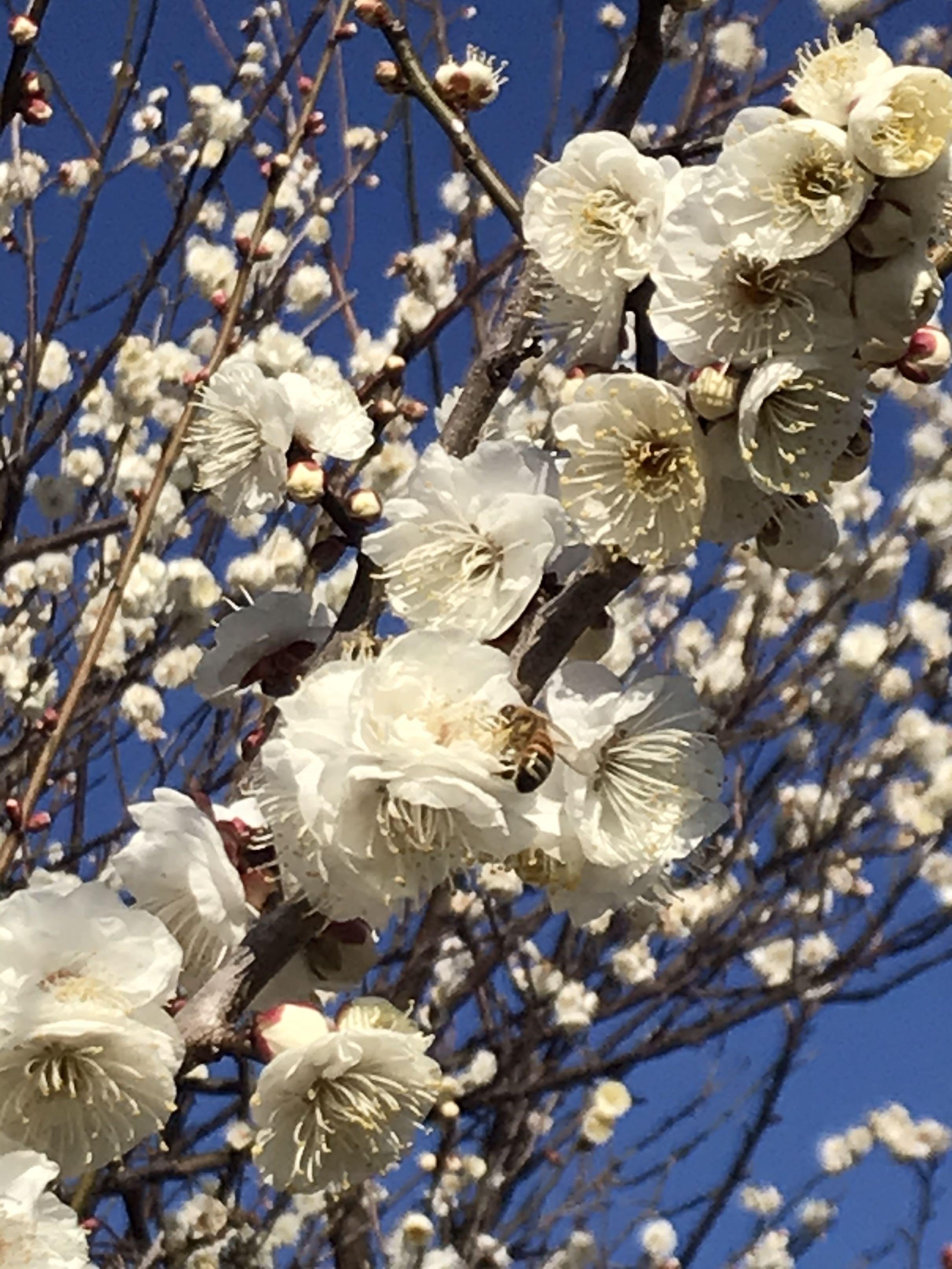 春の三浦アルプス。トレッキング!_1_3