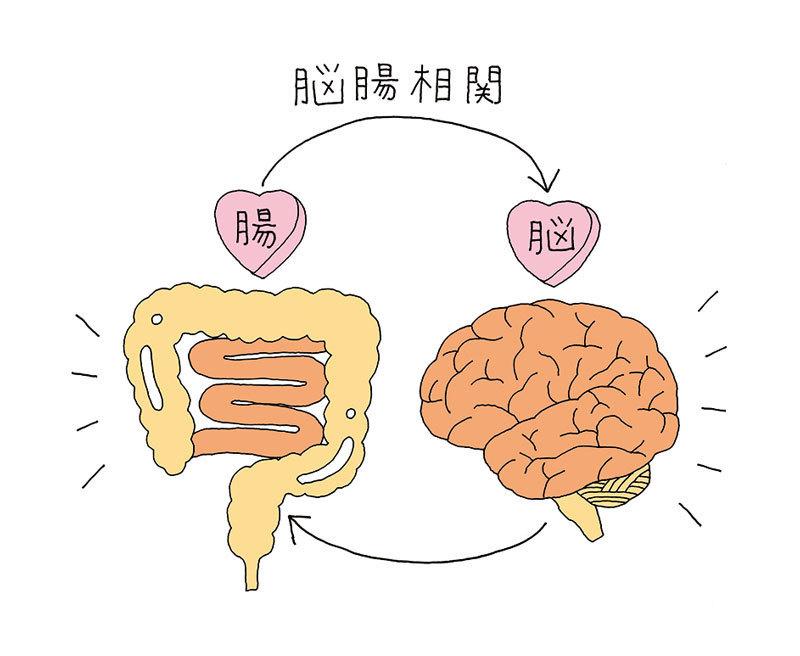 腸と脳の密接な関係が、少しずつ明らかに