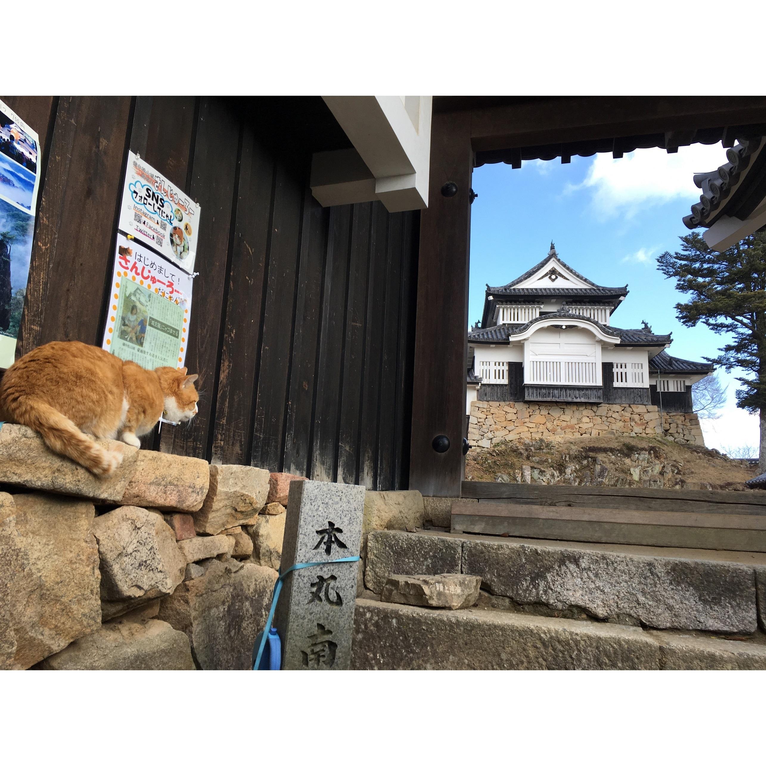 備中松山城の「猫城主」に会いたい!_1_1-2