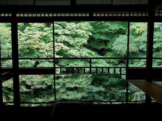 6月の京都。青紅葉、苔庭、紫陽花。_1_2