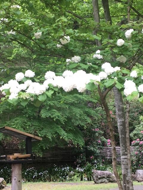 七沢森林公園を散策_1_1-6