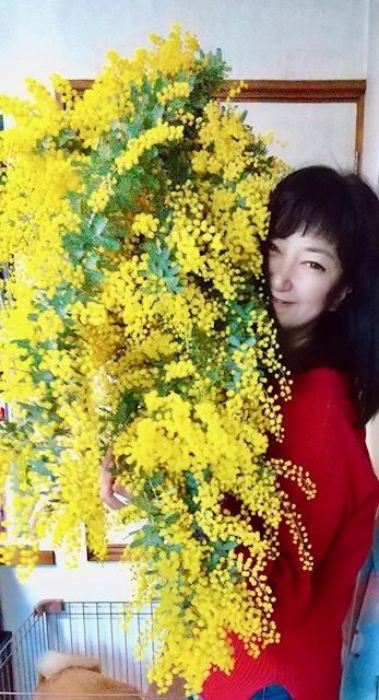 大きなミモザの花束