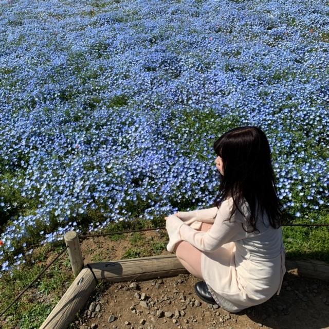 【 国営ひたち海浜公園 】ネモフィラを 見に行こう !_1_3-1