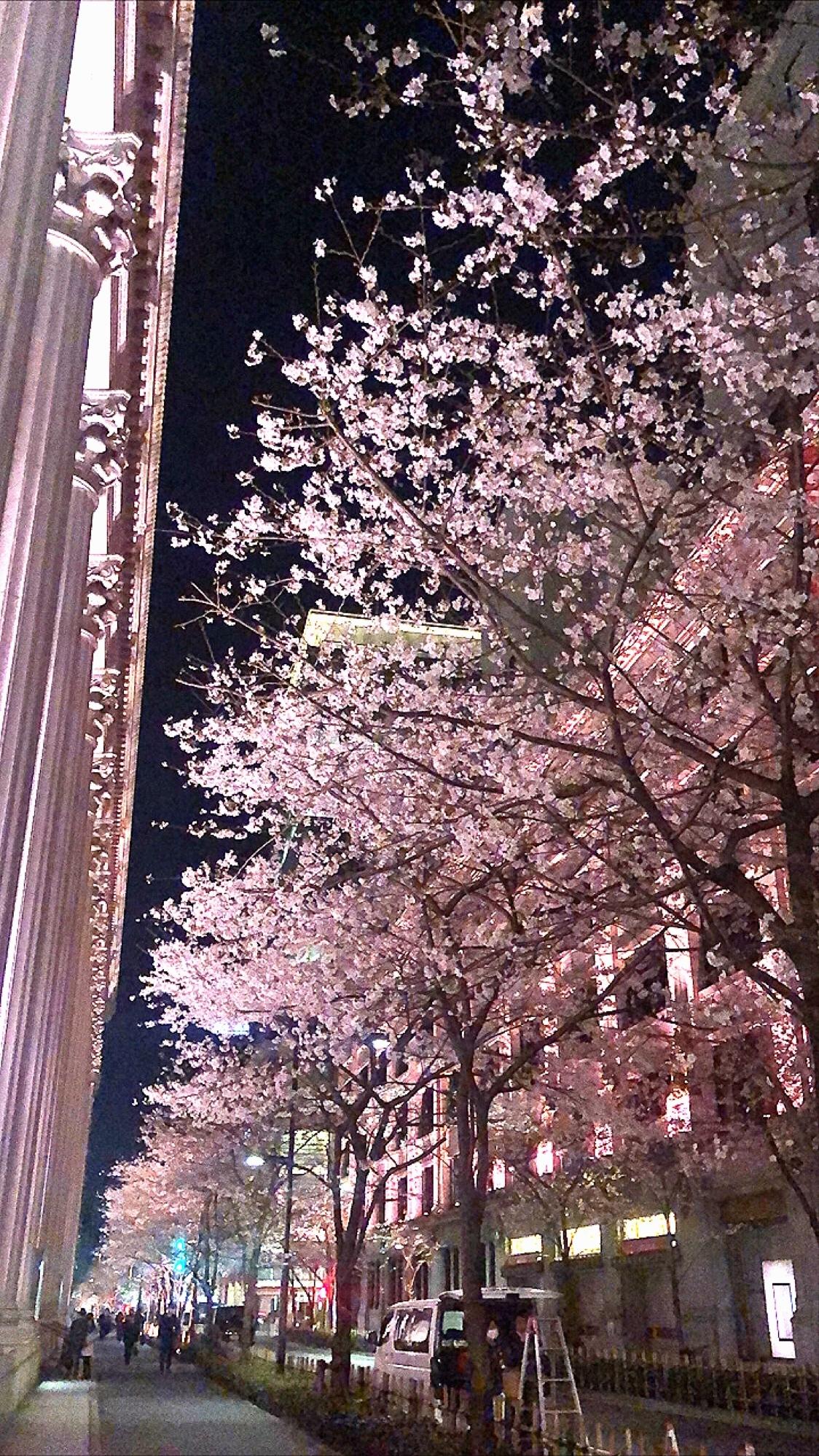 "Vol.81♡ ピンク色のライトアップがカワイイ!""日本橋・桜フェスティバル""_1_1"