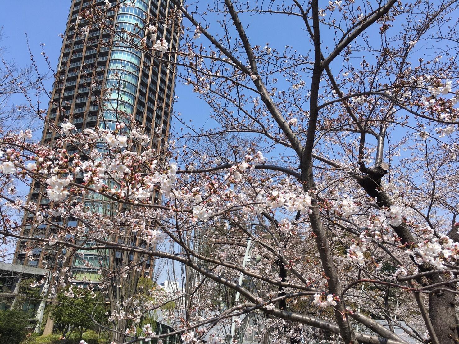 4/14まで♡東京ミッドタウンでお花見_1_1-1