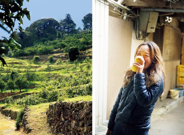 『みかん家 にしごみ』の柑橘園