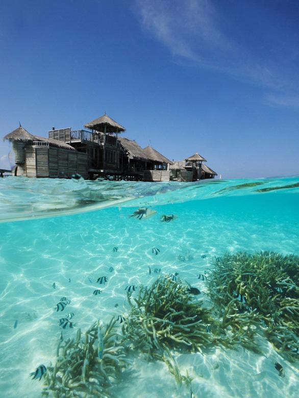 モルディブ最高の自然派リゾート、GILI LANKANFUSHI _1_3-3