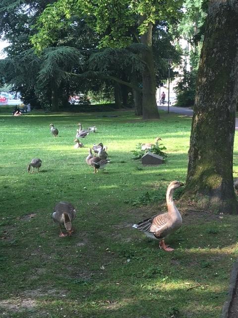 ドイツ デュッセルドルフ 鳥放し飼いの公園_1_1-2