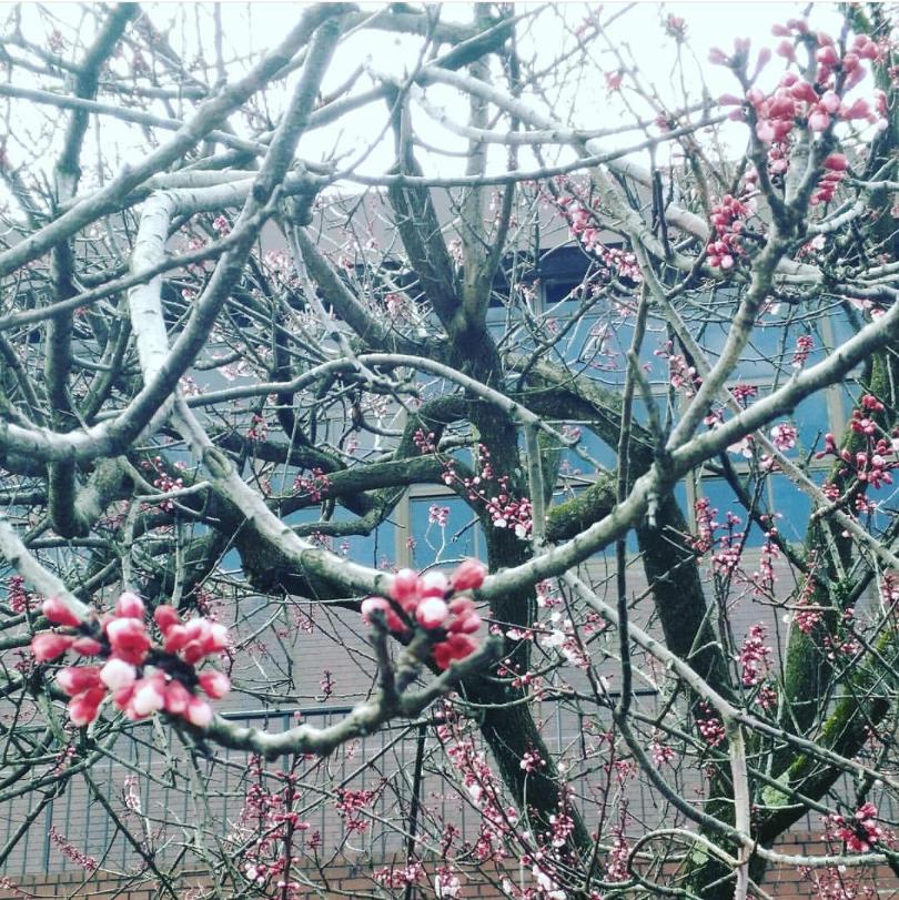 春の金沢旅♪~石川帰省録~_1_1