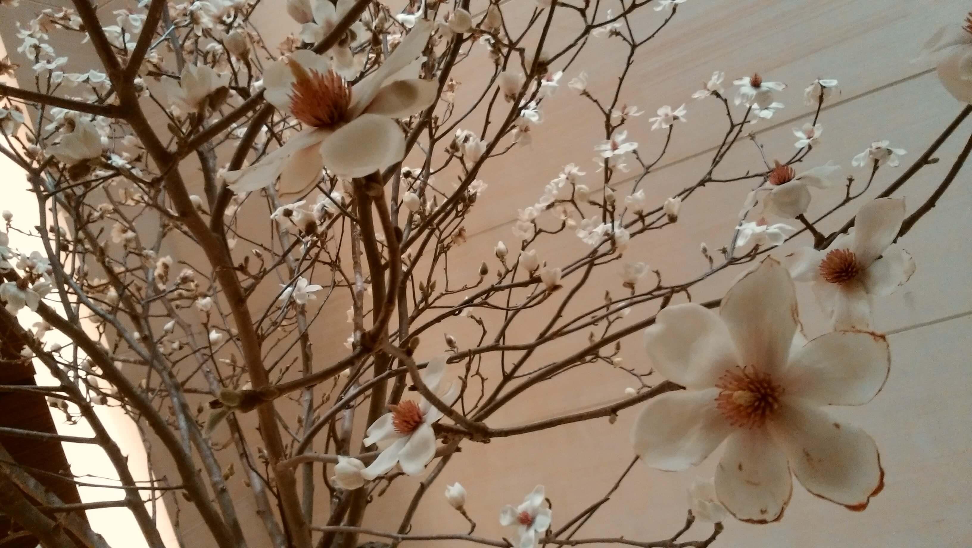 白ボトム「春アイテム」TOMORROWLANDで、そして同期会へ_1_4