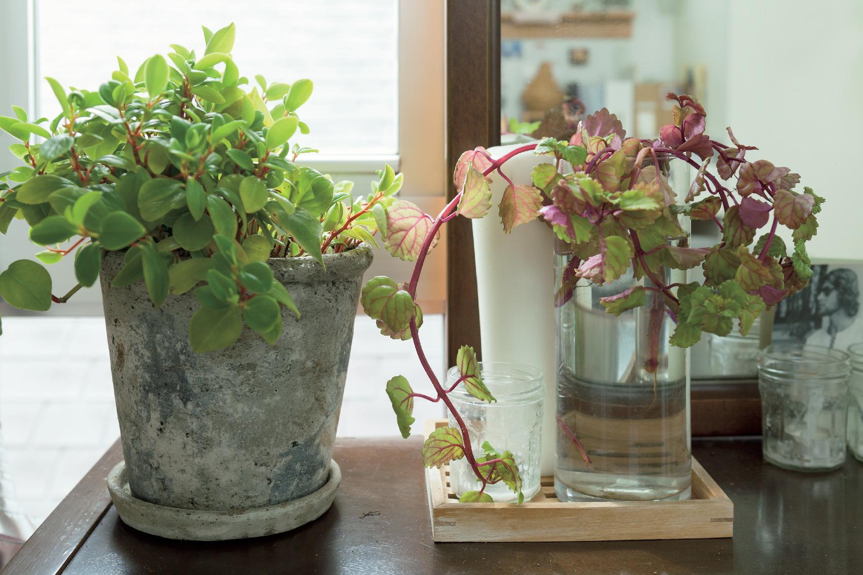 日々の生活を心地よく過ごすための室内グリーンの飾り方 五選_2_2