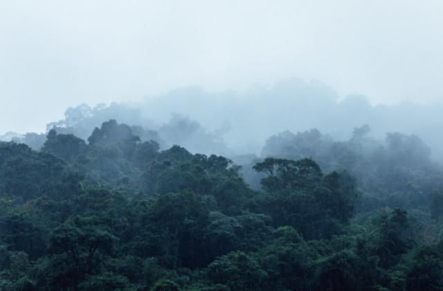 雨の日の烏來の山脈