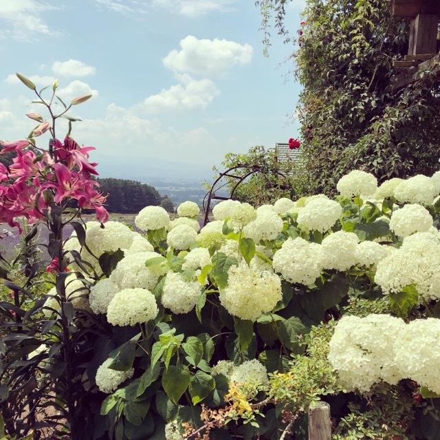 【yuccoのハーブ便り】ハーブ園でラベンダー摘み_1_3