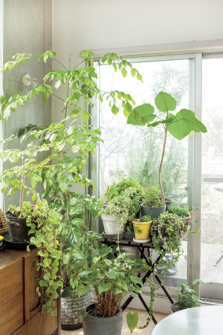 日々の生活を心地よく過ごすための室内グリーンの飾り方 五選_2_1