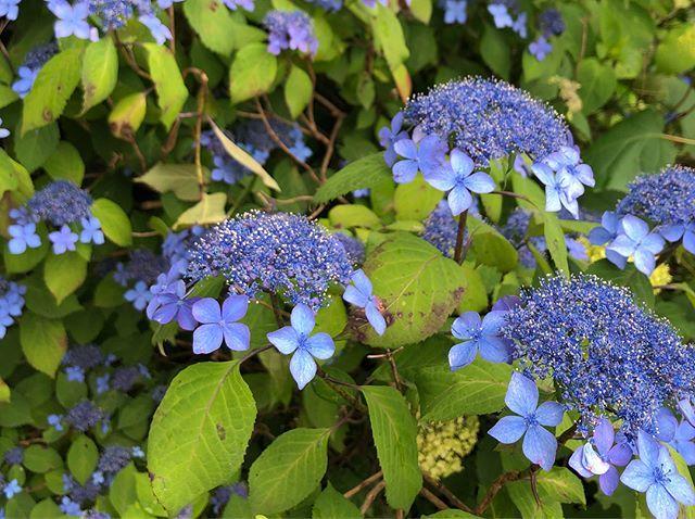 6月の京都。青紅葉、苔庭、紫陽花。_1_4