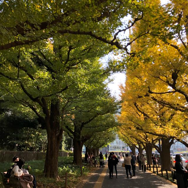 東京も色づきが進んでいます。_1_2