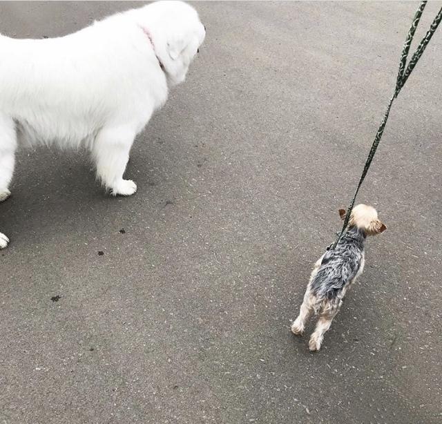 犬を飼うということ【40代 私の暮らし】_1_2