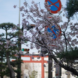 鎌倉に来たら是非立ち寄って欲しい、スタイリッシュなカレー屋さん♫_1_3-1
