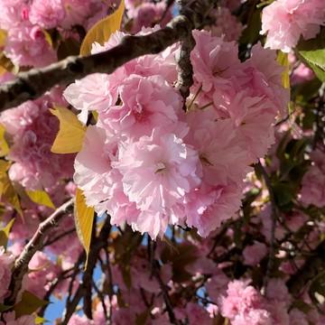 白デニムで出かけよう☆彡 春の散策・・・