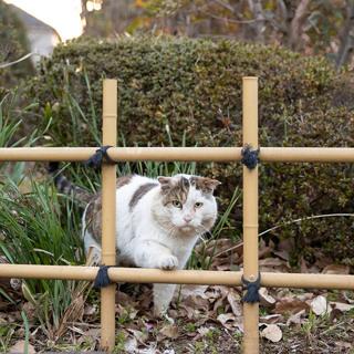 井の中の猫かつおぶしを欲す【水曜日のねこたちへ #121】