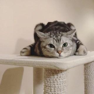猫だけど、カエル寝