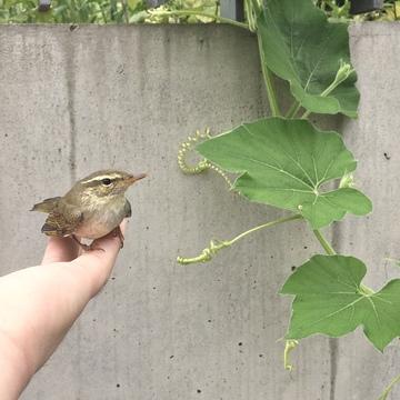 小鳥を拾った日。