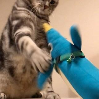 超高速!猫パンチ連打!