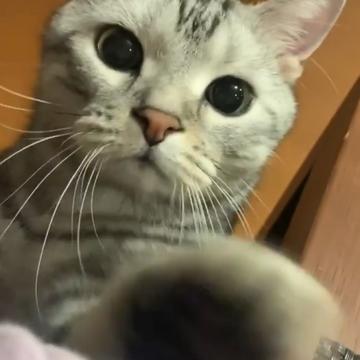 【動画】ちょっと、ちょっと!