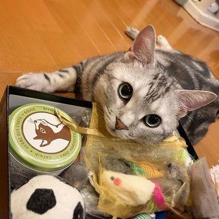 おもちゃいっぱいでご満悦!