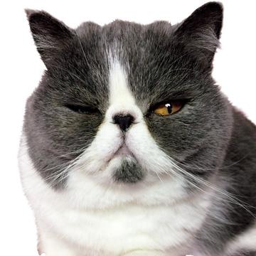 エクラにゃんスタ大賞を受賞した、癒しの猫写真五選