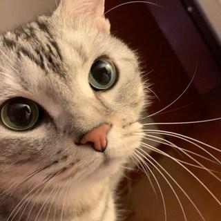 しゃべる猫が「母の日」に⁉︎(動画)