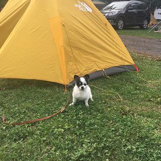 軽井沢で初めてのテント泊!【チワワ グミちゃん #5】