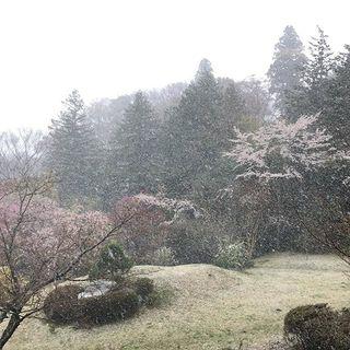 箱根の山に、春の雪。