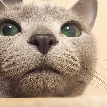 【にゃんスタ厳選集】毛並み1本1本までよく見える!にゃんこたちの「どアップ」ショット