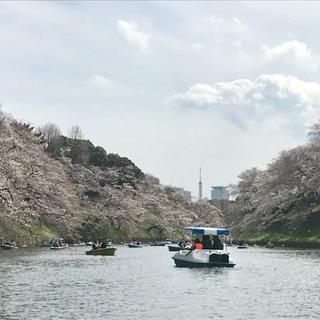 都会のお花見ツアー_1_3