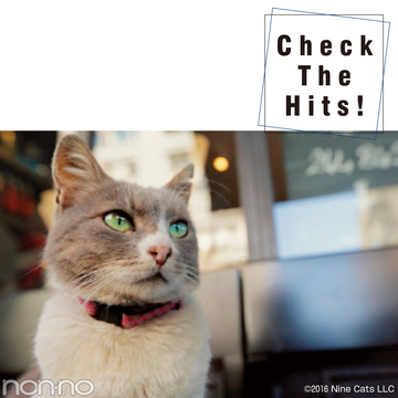 『猫が教えてくれたこと』etc.12月の話題の映画4選!【Check The Hits!】