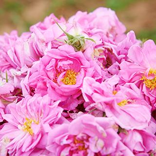【ディシラで冬のうぬぼれケア】薔薇の香りに包まれてご褒美バスタイムのすすめ