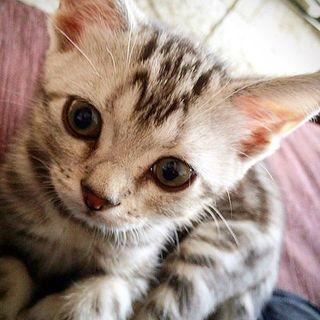 耳の大きな子猫でした