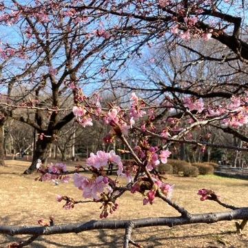 代々木公園•春の予感