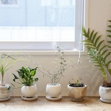 植物のある暮らし。Jマダムは断然〇〇派!