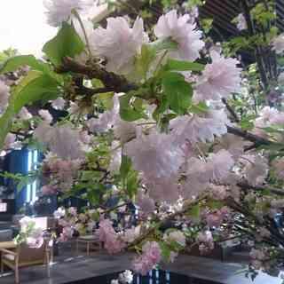 オトナの休日はアマン東京のアフタヌーンティーでのんびりと。_1_2