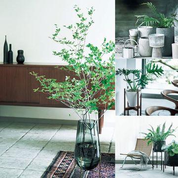 「インテリアグリーン」をセンスよく飾る7つのアイデア